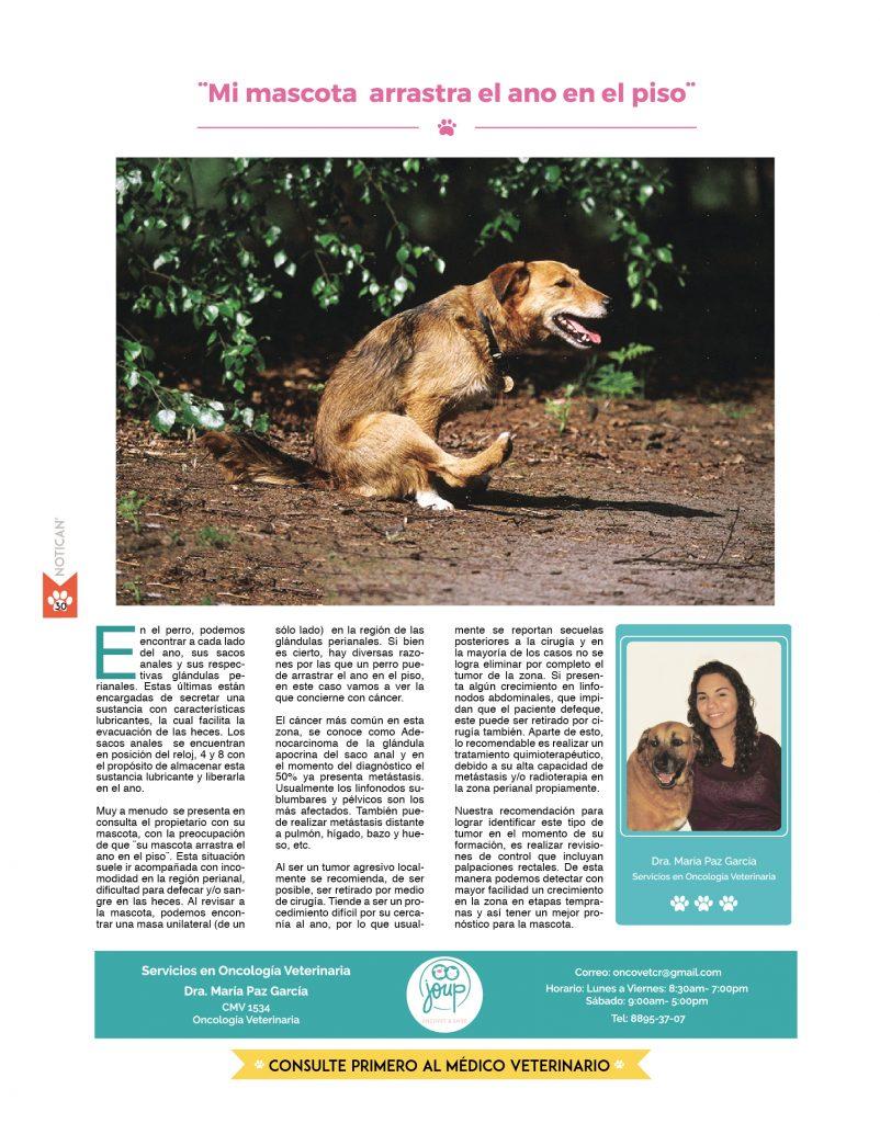 Moderno Bazo Anatomía Perro Ideas - Anatomía de Las Imágenesdel ...
